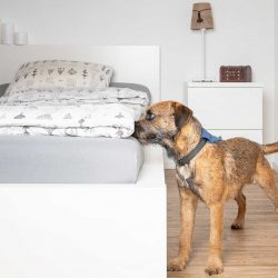 Pro Cane Spürhund